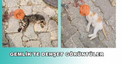 Yavru Kedileri Kafasını Ezerek Öldürmüşler